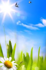 Fototapeta Minimalistyczny abstracts beautifu spring background