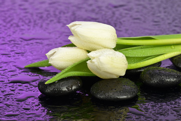 fototapeta tulipany na kamieniach do spa