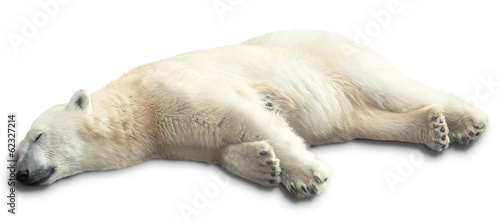 Spoed Foto op Canvas Ijsbeer one polar bear
