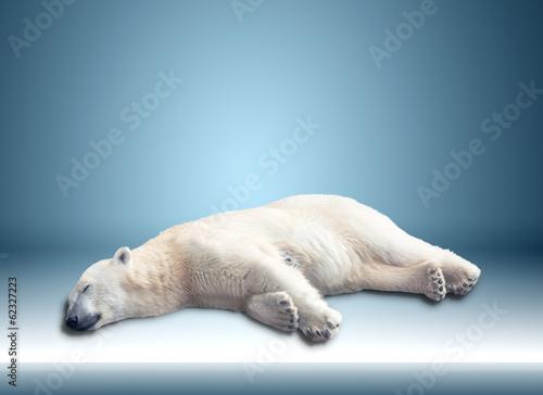 Staande foto Ijsbeer one polar bear
