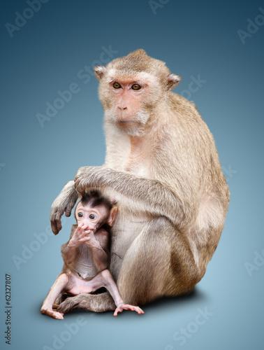 In de dag Two monkeys