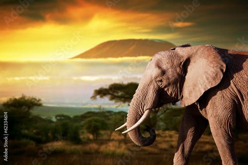 Papiers peints Elephant Elephant on savanna. Mount Kilimanjaro at sunset. Safari