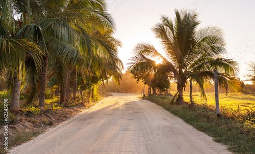 Aluminium Prints Dark grey Road in jungle