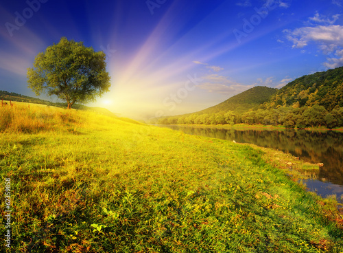 Photo Stands Yellow summer landscape