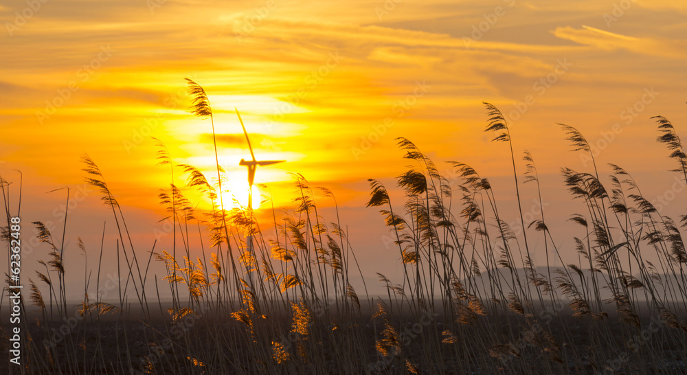 Fototapety, obrazy: Sunrise over reed in a field in winter