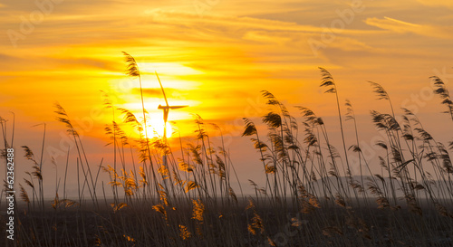 Spoed Foto op Canvas Zonsondergang Sunrise over reed in a field in winter