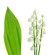 Flowers And Leaves Of Lilly Of...