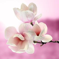 Panel Szklany Do pokoju dziewczyny magnolia
