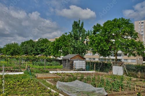 France, allotment garden in Les Mureaux Wallpaper Mural