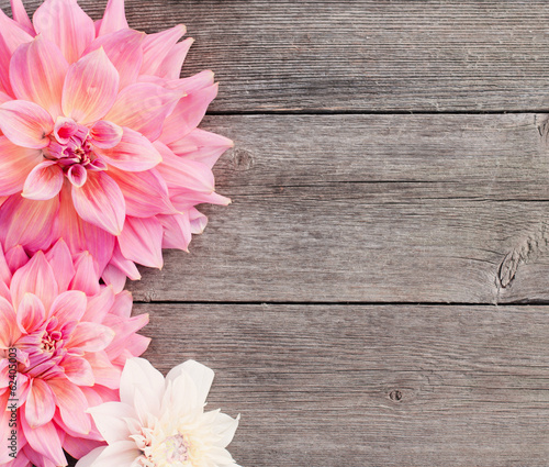 Photographie dahlia on wooden background