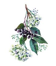 Elder Branch