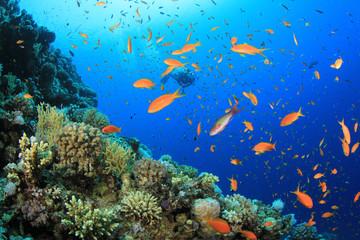 Fototapeta na wymiar Scuba diving on coral reef