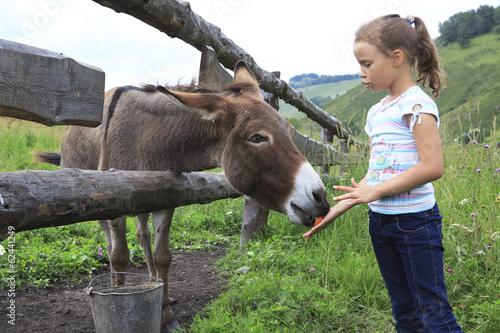 Poster Ezel Little girl feeding donkey carrot.