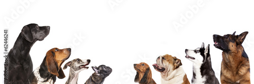 group of dogs is looking up Poster