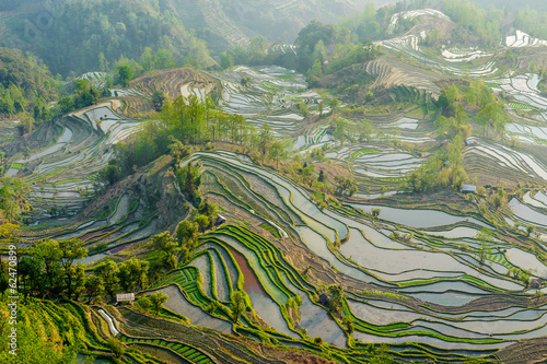 Garden Poster Rice fields Yuan Yang Rice Terraces
