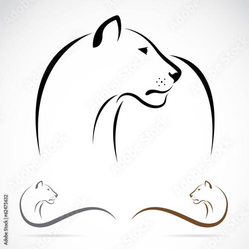 Fototapeta Vector of a female lion on white background. Animals.