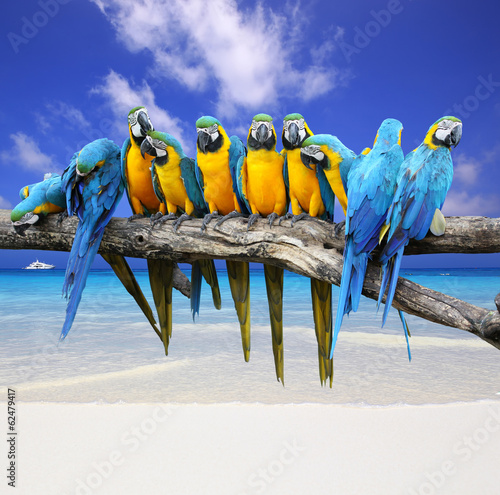 Blue and Yellow Macaw on the white sand beach white blue sky Fotomurales