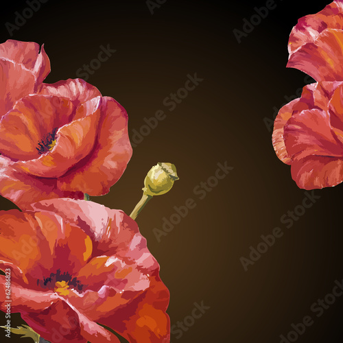 Oil painting. Card with poppies flowers on darck background.