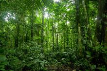 Tropical Rainforest Landscape,...