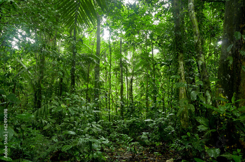 Tropical Rainforest Landscape, Amazon Fotobehang