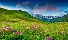 Beautiful View Of Alpine Meado...