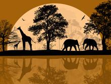 Wild African Animals