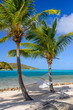 Hamock between two palm trees on tropical beach