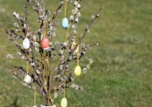 Easter Eggs On Willow Twig