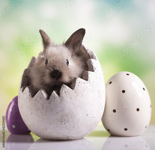 Easter animal, bunny Canvas Print