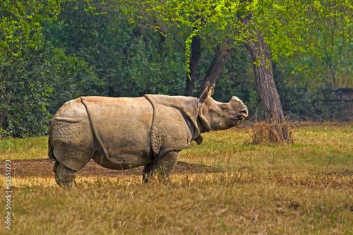 Spoed Foto op Canvas Neushoorn Asian rhinoceros