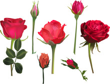 Three Red Roses And Four Buds ...