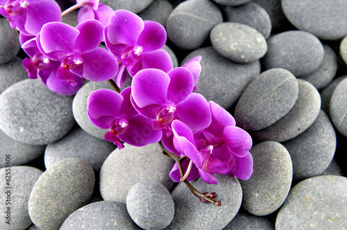 Pink branch orchid on the gray pebbles