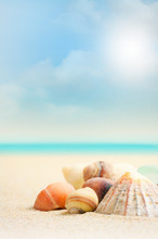 French Beach And Shells - Clos...