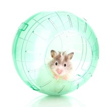Cute Hamster Popping Out Of Gr...