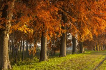 Fototapeta jesienne drzewa