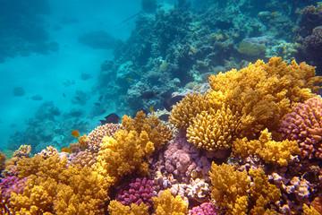 Naklejka na ściany i meble coral reef