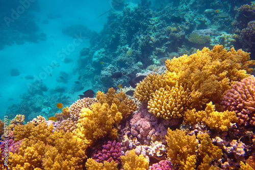 Photo Stands Coral reefs coral reef