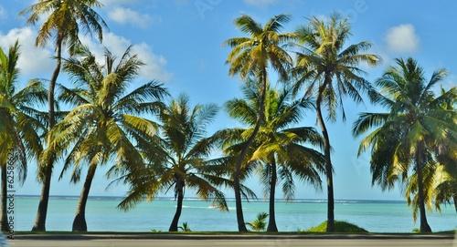 Papiers peints Palmier Palm Trees and the Beach