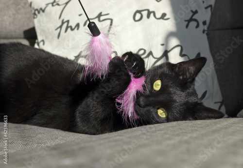 Black cat plays with pink toy