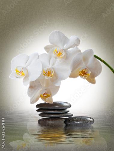 Keuken foto achterwand Orchidee Orchideenblüte über Wasser mit Schmucksteinen