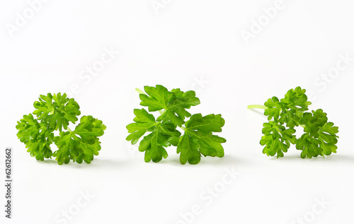 Fotomural Fresh parsley sprigs