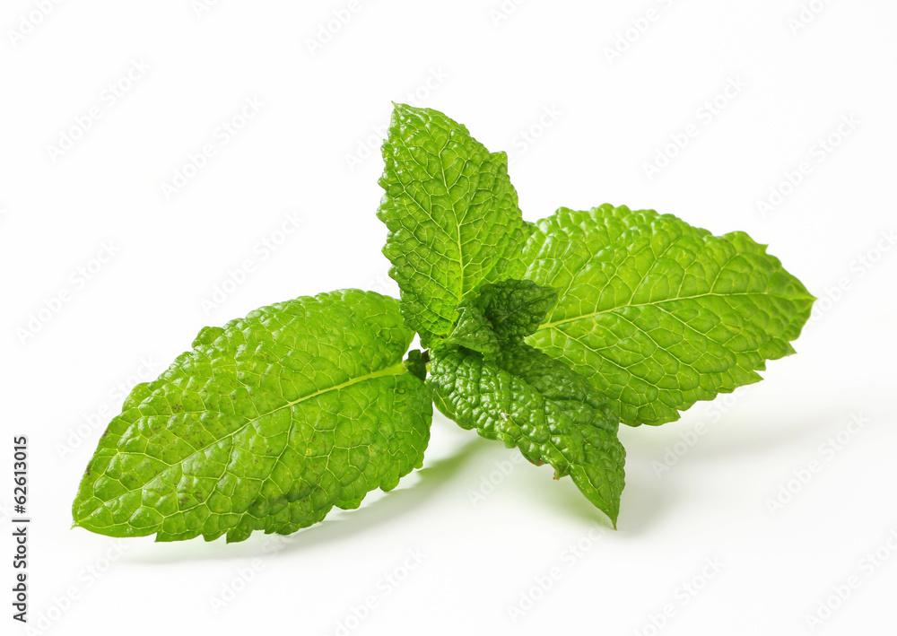 Fotografie, Obraz Fresh mint leaves - Posters.cz