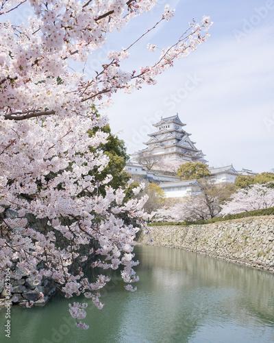 Foto op Plexiglas Japan Cherry blossoms and castle in spring, Japan