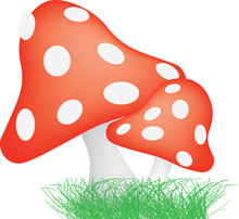 Red And White Spotted Toadstools