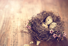 Birds Nest With Eggs And Tiny ...