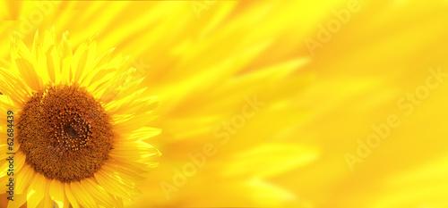 In de dag Zonnebloem Banner with sunflower