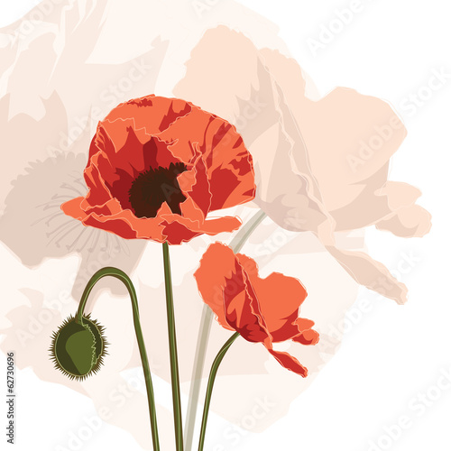 Keuken foto achterwand Abstract bloemen Papaver graphic