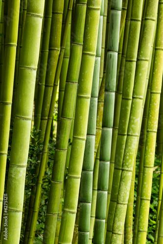 Obrazy tajemniczy ogród   bambus