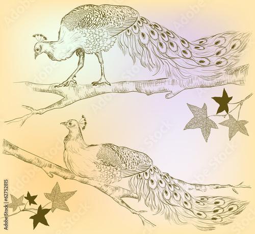 peacocks on a tree
