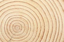 Cross Cut Of A Timber Beam